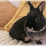 Netherland Dwarf Bunnies Behavior