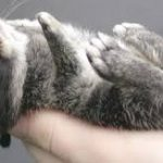 When Is A Netherland Dwarf Rabbit Fully Grown