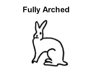 full-arch rabbit breeds
