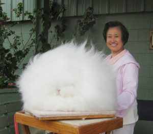 What are The Four Types of Rabbit Fur