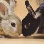 What's The Difference Between A Hare And A Rabbit?